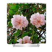 Renewal Series Shower Curtain