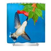 Ruby Throated Hummingbird Female Shower Curtain