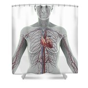 The Cardiovascular System Female Shower Curtain