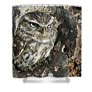 100205p259 Shower Curtain