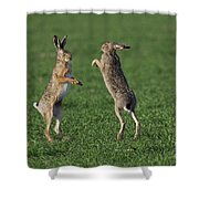 101130p214 Shower Curtain