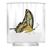 104 Perched Swallowtail Butterfly Shower Curtain