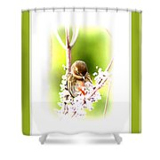 104036-008 Shower Curtain
