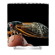 A Detailed View Of A Brood II Cicada Shower Curtain
