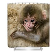 Baby Snow Monkey, Japan Shower Curtain