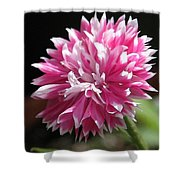 Bachelor Button From The Frosted Queen Mix Shower Curtain