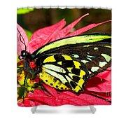 Cairns Birdwing Butterfly Shower Curtain