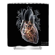 Coronary Blood Supply Shower Curtain