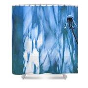 Dandelion Close-up View Backlit Shower Curtain