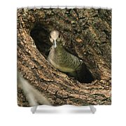 Immature Hooded Merganser Shower Curtain