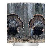 Jake Eastern Wild Turkeys Shower Curtain