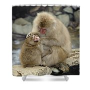 Snow Monkeys Shower Curtain
