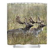 110221p118 Shower Curtain