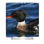 110307p039 Shower Curtain