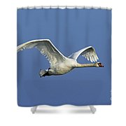 110307p064 Shower Curtain