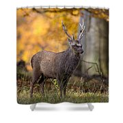 110307p069 Shower Curtain