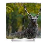 110307p070 Shower Curtain