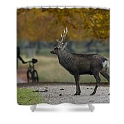 110307p071 Shower Curtain
