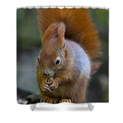 110307p076 Shower Curtain