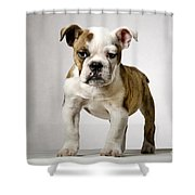 110307p152 Shower Curtain