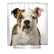 110307p153 Shower Curtain