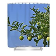 110414p073 Shower Curtain
