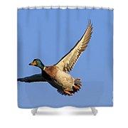 110506p031 Shower Curtain