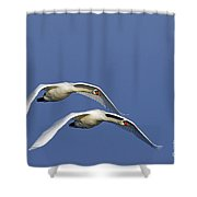 110506p087 Shower Curtain