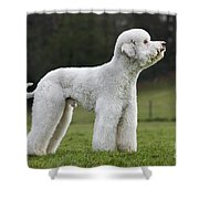 110506p121 Shower Curtain