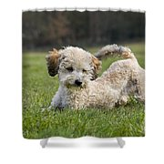 110506p132 Shower Curtain