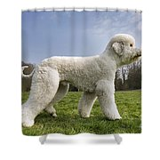 110506p134 Shower Curtain
