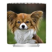 110506p149 Shower Curtain