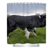 110506p164 Shower Curtain
