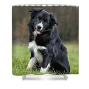 110506p166 Shower Curtain
