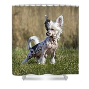110506p174 Shower Curtain