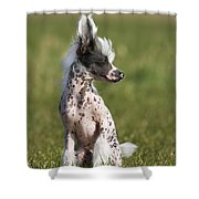 110506p176 Shower Curtain