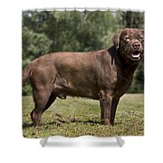 110506p184 Shower Curtain