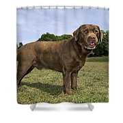 110506p186 Shower Curtain