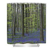 110506p233 Shower Curtain