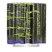 110506p244 Shower Curtain