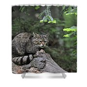 110613p008 Shower Curtain