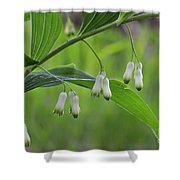 110613p045 Shower Curtain