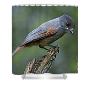 110613p214 Shower Curtain