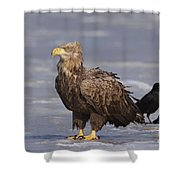 110613p227 Shower Curtain