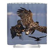 110613p229 Shower Curtain
