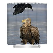 110613p230 Shower Curtain
