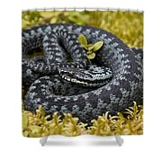 110714p096 Shower Curtain