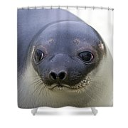 110714p130 Shower Curtain