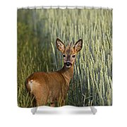 110714p133 Shower Curtain