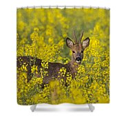 110714p138 Shower Curtain